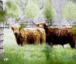 Manoir de Kernault - Highland cattle