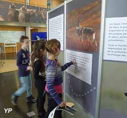 Maison de l'Environnement de Paris-CDG - Expo loups et ours