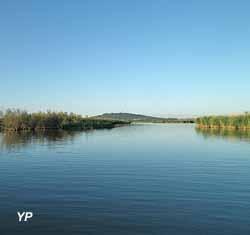L'étang du Bagnas et la roselière