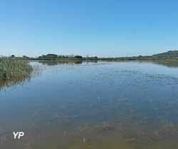 L'étang du Bagnas en été