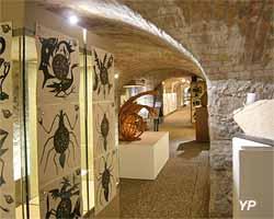 Musée Muséum départemental des Hautes-Alpes