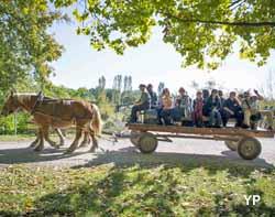 Ecomusée d'Alsace - course des conscrits