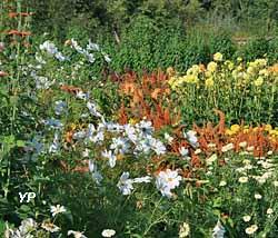 Fleurs du potager en été