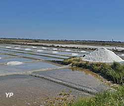 Visite de Batz-sur-Mer - marais salants