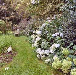 Hydrangeas 'Annabelle' 'Beauté Vendômoise et 'Ayesha' en septembre (Le Clos de Chanchore)