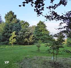 Dans l'arboretum, vue sur le quercus palustris