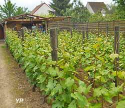 Vignoble de la commune libre de Saint-Martin (Ville de Pontoise)