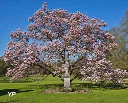 Magnolia classé Arbre remarquable
