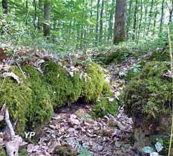 Site des Sablonnières (A. Gauthier)