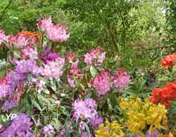 Arboretum Les Feuilles Fleuries (E. Bariller)