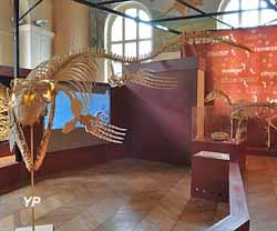 Museum d'histoire naturelle (Yalta Production)