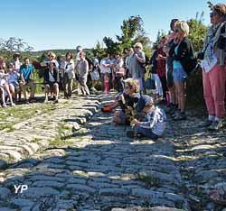 Site archéologique et musée d'Ambrussum