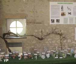Ecomusée de la Vallée de l'Aigre - expo 2018 Le Jardin des Plantes