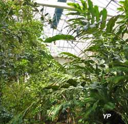 Jardin Botanique de Tours - serres biodivers plantes utilitaires