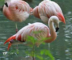 Jardin Botanique de Tours - Flamants roses