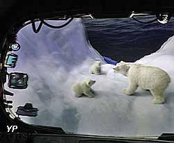 Bathyscaphe : Arctic 4D