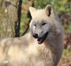 Parc Argonne Découverte - loup d'Arctique