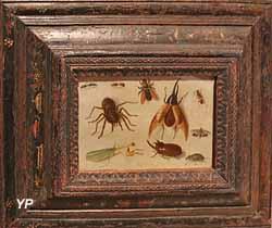 Insectes et araignée (Jan I van Kessel, 1660)