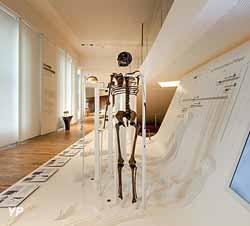 Musée de l'Homme - Dispositif Les Hommes sortent d'Afrique (JCDomenech - MNHN)