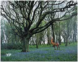 Le cerf représente à lui seul toute la forêt, série partir dans le décor (Jean-Yves Belivret)