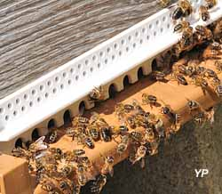 Abeilles sur la planche d'envol de la ruche