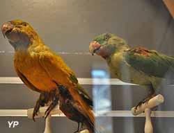 Museum d'Histoire Naturelle (OT Val de Gray)