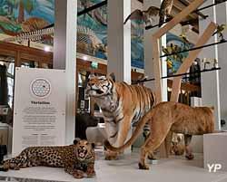 Museum d'histoire naturelle (MHNM)